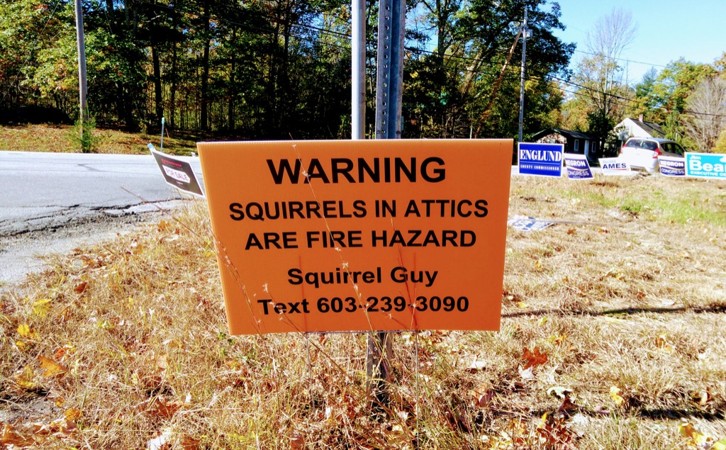 Squirrel Guy Sign in Dublin, NH