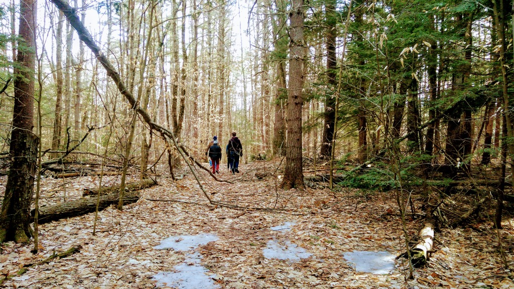 Walking in the woods with colleagues