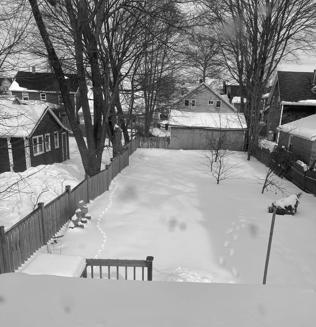 A view out the back window of my house at the snow in the back yard, with animal tracks leading along the left side near the fence.