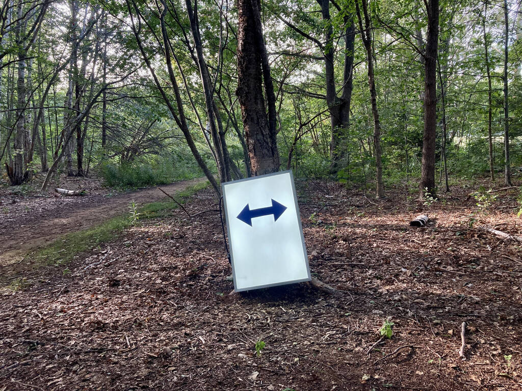 Arrows in the forest