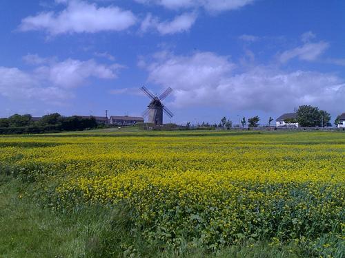 Windmill and Field