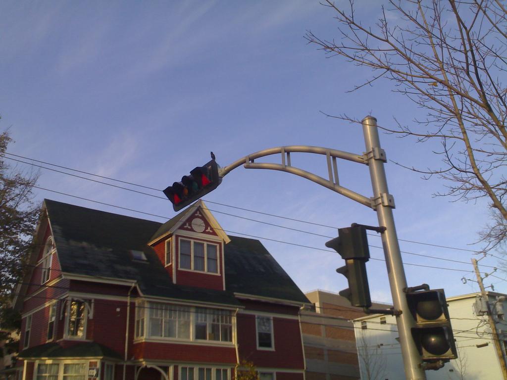 The Traffic Light Bird