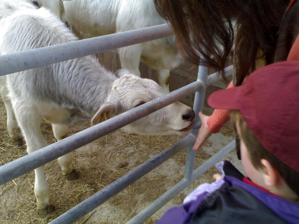 Cattle at Fattoria Poggio Alloro