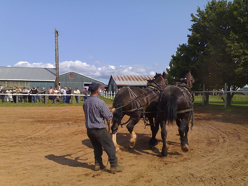 Readying the Horses