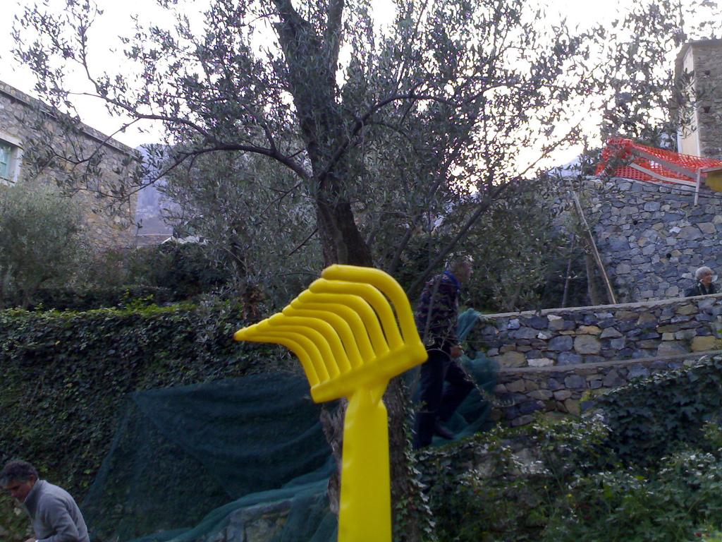 My Yellow Olive Rake