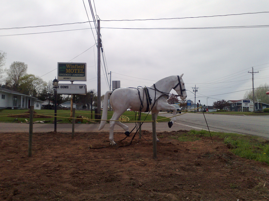 Horse at Winfield Motel