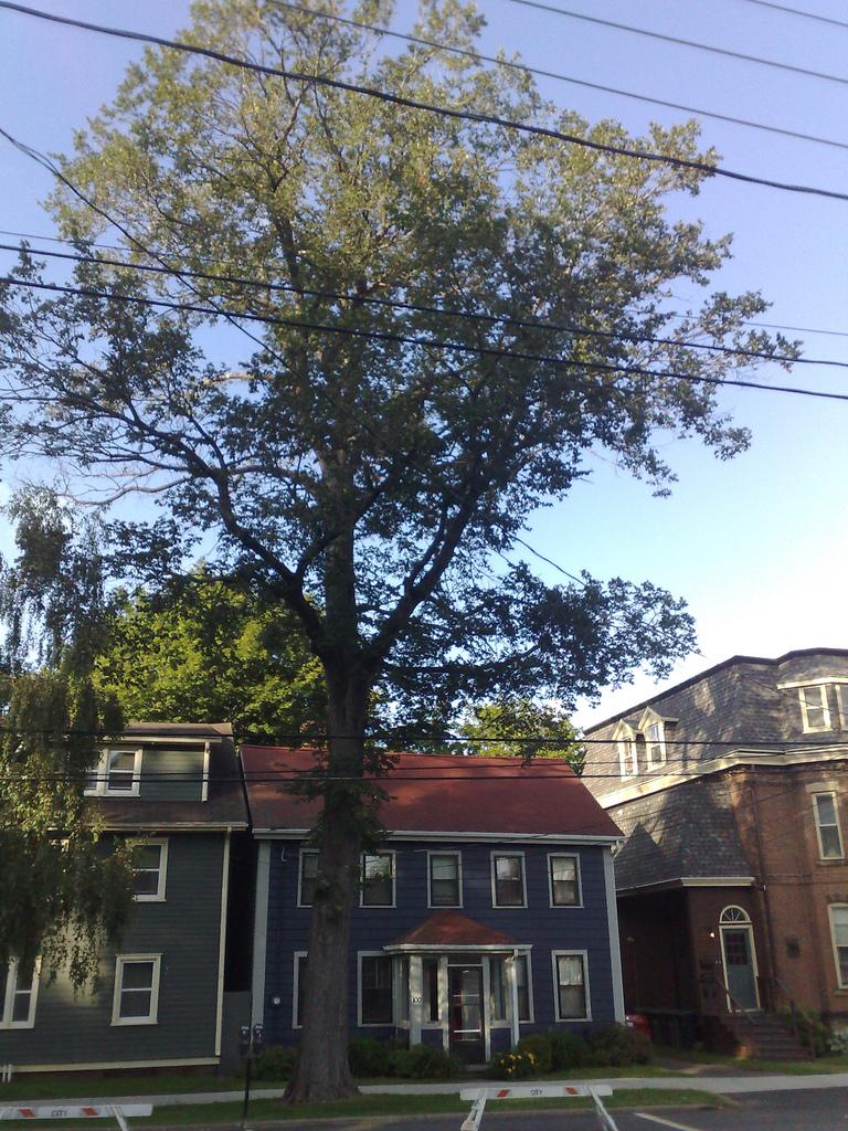 Tree at 100 Prince Street
