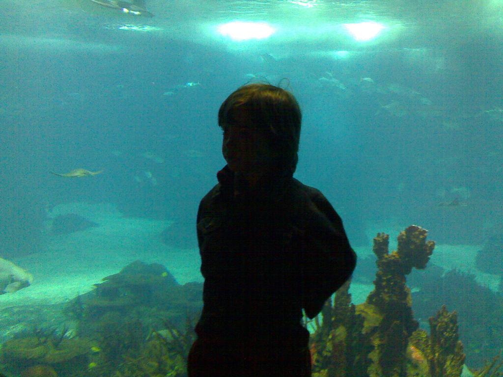 Oliver at Lisbon Oceanarium