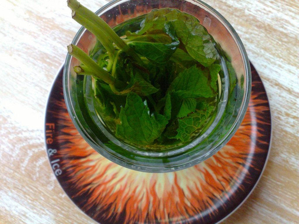 Mint Tea in Enschede