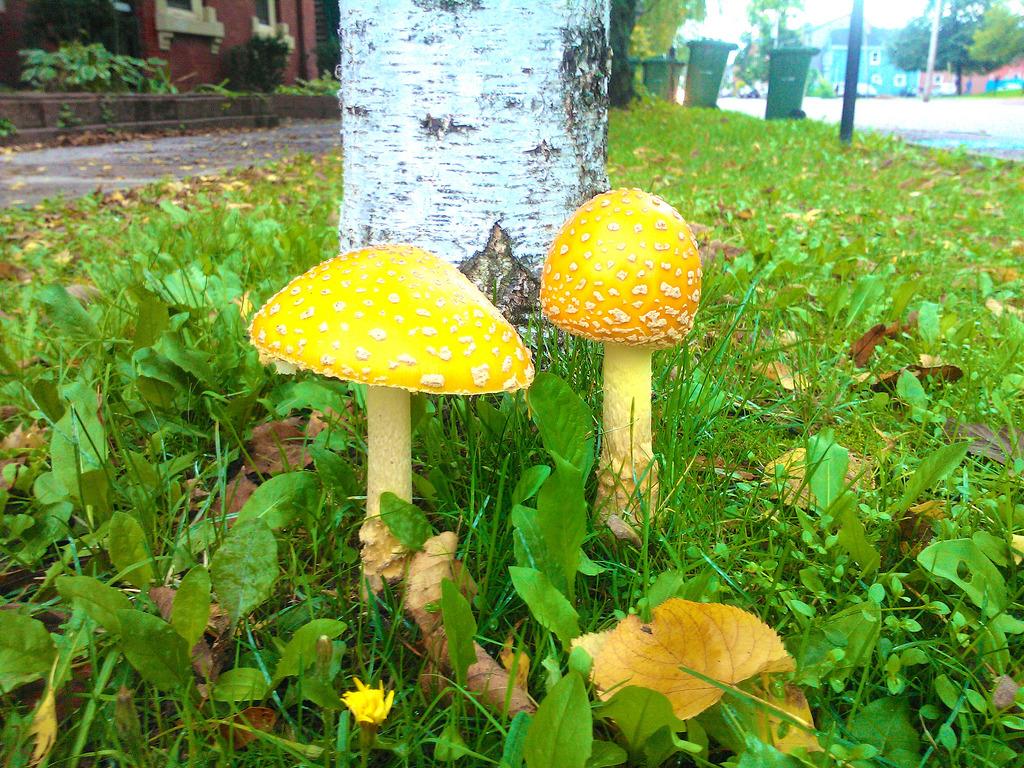 Mushrooms on Prince Street
