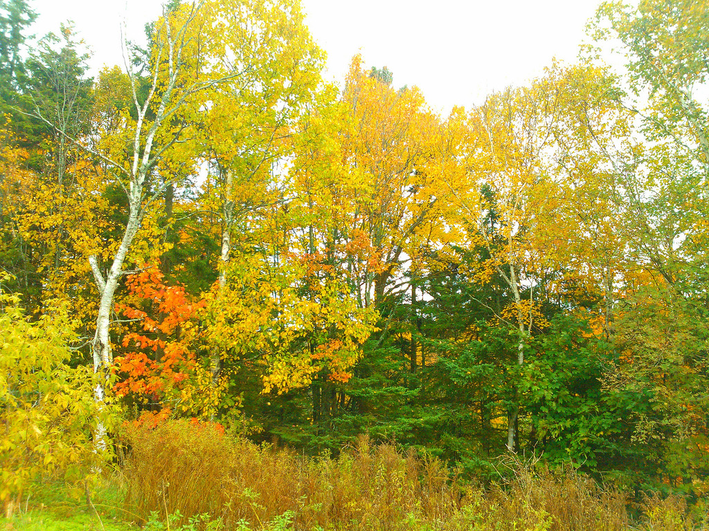 Fall in the Bonshaw Hills