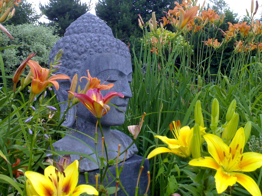 Buddha and the Lilies
