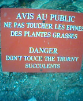 Danger: Don't Touch the Thorny Succulents