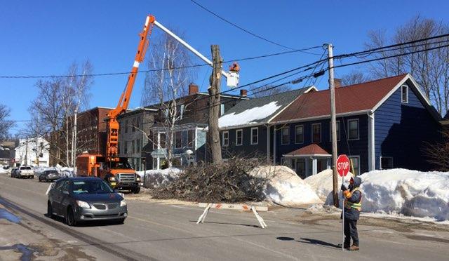 Chopped Down Elm Tree at 100 Prince