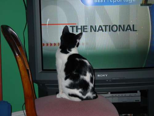 National Cat