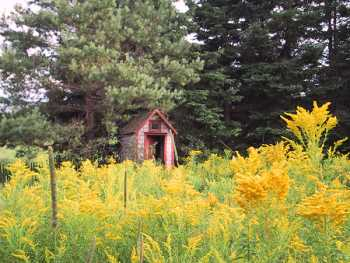 Goldenrod and Outhouse, Cranberry Wharf, PEI, 8/13/2000