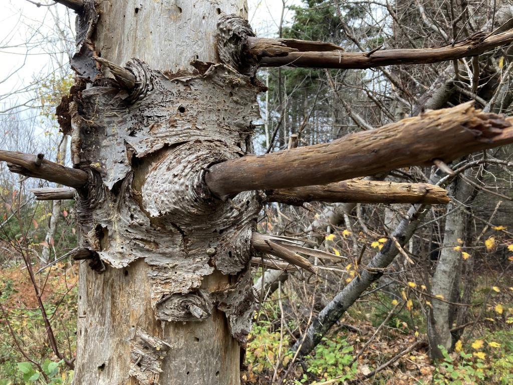 Section of a dead tree.