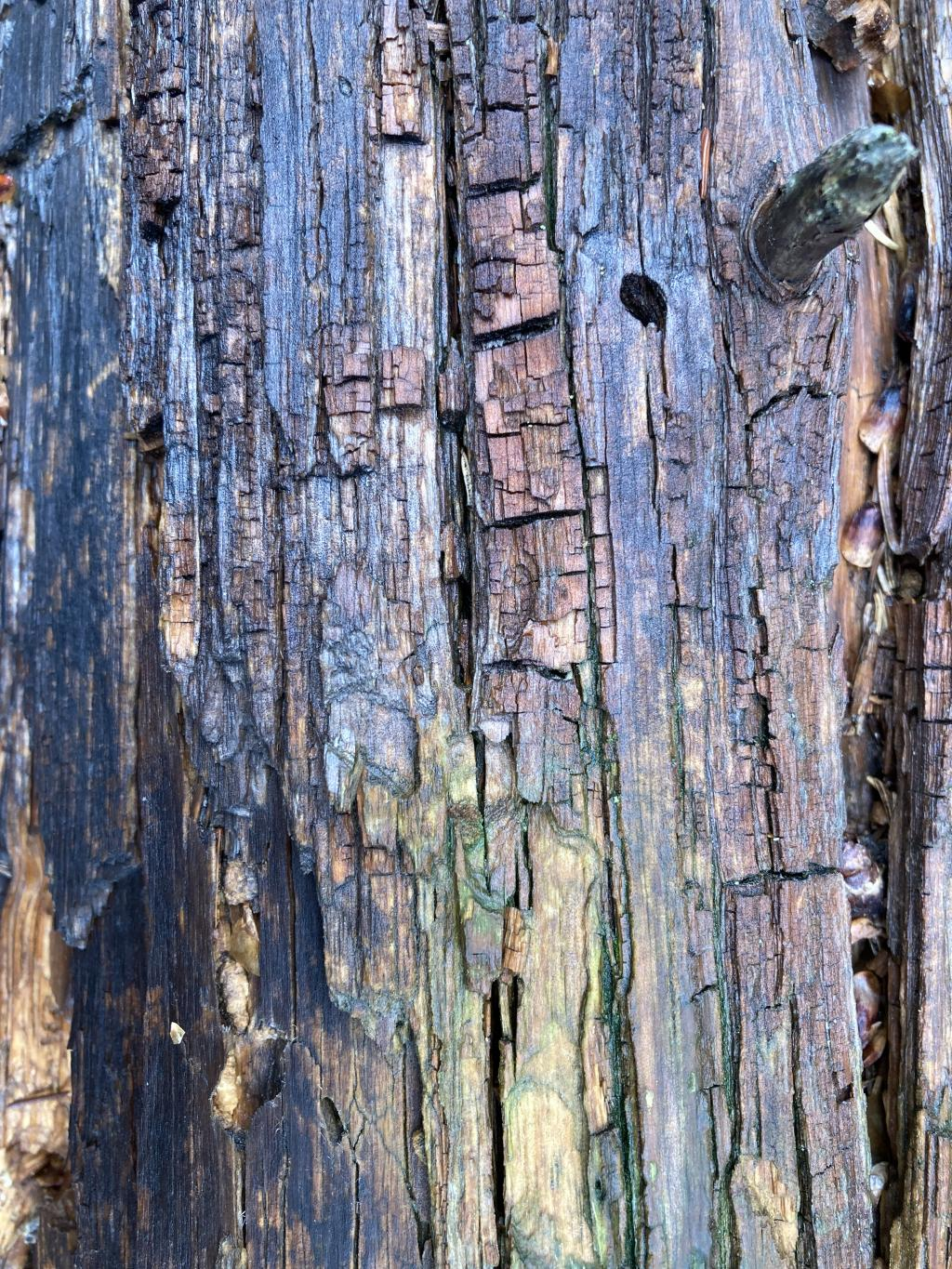 Section of a felled tree.