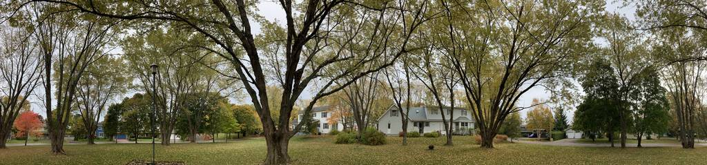 Panoramic photo of St. Clair Park, showing many large silver maple trees.